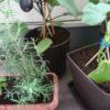 家庭菜園を始めるなら?プランターと貸農園のメリットデメリットまとめ