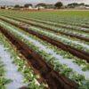 【家庭菜園】畝とは?畝の種類、畝の効果など「畝」にまつわる基礎知識のまとめ