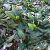 【家庭菜園】防寒対策「不織布、寒冷紗、ビニールトンネル」いつ使うべきか、どの方法