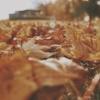 【11月の家庭菜園】種まきと苗植えできる野菜、防寒対策、収穫、畑管理のポイントまと