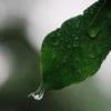【6月の家庭菜園】種まきしたいおススメ野菜、梅雨時期の畑管理ポイントまとめ