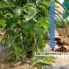 【家庭菜園】基本的な追肥のやり方、追肥する肥料量についての注意点