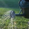 【家庭菜園】液体肥料の特徴と使い方について