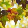 【9月の家庭菜園】おススメの野菜、9月の植え付けは要注意、とにかく急ぎましょう!!